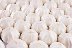 Priorità bassa bianca delle lampadine dell'aglio Fotografia Stock Libera da Diritti