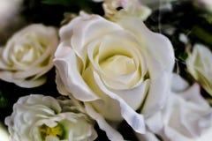 Priorità bassa bianca delle rose Fotografia Stock Libera da Diritti