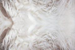 Priorità bassa bianca di struttura della pelliccia Fotografie Stock