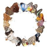 Priorità bassa in bianco del blocco per grafici della farfalla Fotografie Stock Libere da Diritti