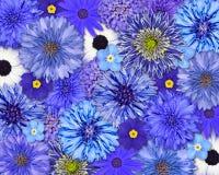 Priorità bassa blu del fiore Fotografie Stock
