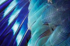 Priorità bassa blu della piuma Fotografie Stock Libere da Diritti