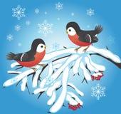 Priorità bassa celebratoria di inverno Immagine Stock