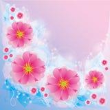 Priorità bassa chiara con i fiori Fotografie Stock