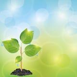 Priorità bassa chiara di eco con la pianta Immagini Stock Libere da Diritti