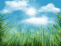 Priorità bassa con erba ed il cielo Fotografie Stock Libere da Diritti