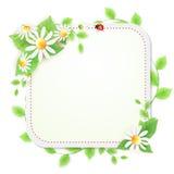 Priorità bassa con i fiori delle margherite Fotografia Stock