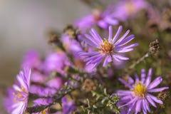 Priorità bassa con i fiori dentellare fotografie stock