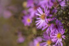 Priorità bassa con i fiori dentellare fotografia stock