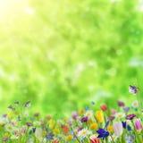 Priorità bassa con i fiori selvaggi Immagine Stock Libera da Diritti