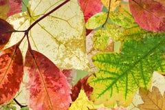 Priorità bassa con i fogli di autunno Immagini Stock