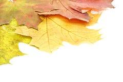 Priorità bassa con i fogli di autunno. fotografia stock libera da diritti