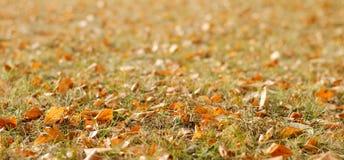 Priorità bassa con i fogli di autunno Immagine Stock