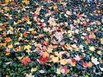 Priorità bassa con i fogli di autunno variopinti Fotografia Stock