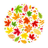 Priorità bassa con i fogli di autunno variopinti Illustrazione di vettore Fotografia Stock Libera da Diritti