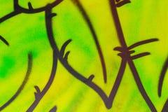 Priorità bassa con i fogli verdi Graffiti sulla parete fotografia stock libera da diritti