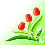 Priorità bassa con i tulipani Fotografia Stock Libera da Diritti