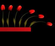 Priorità bassa con i tulipani rossi Immagine Stock