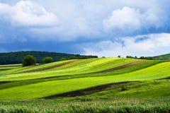 Priorità bassa con il campo verde Fotografie Stock Libere da Diritti