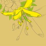 Priorità bassa con il fiore giallo Fotografia Stock