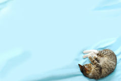 Priorità bassa con il gatto di sonno nel giusto angolo Fotografie Stock
