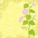 Priorità bassa con il Ipomoea dei fiori Fotografie Stock Libere da Diritti