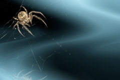 Priorità bassa con il ragno Fotografia Stock Libera da Diritti