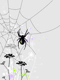 Priorità bassa con il ragno Fotografie Stock Libere da Diritti