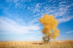 Priorità bassa con l'albero giallo immagini stock libere da diritti