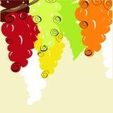 Priorità bassa con l'uva stilizzata Fotografia Stock