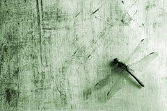 Priorità bassa con la libellula Fotografia Stock Libera da Diritti