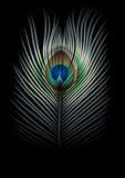 Priorità bassa con la piuma dei pavoni Fotografia Stock