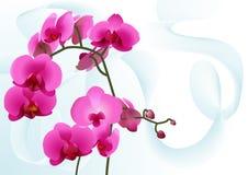 Priorità bassa con le orchidee Fotografia Stock Libera da Diritti