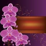 Priorità bassa con le orchidee esotiche del fiore Immagini Stock Libere da Diritti