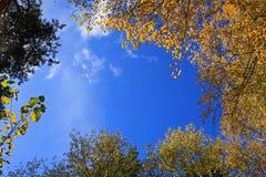Priorità bassa con le parti superiori degli alberi di autunno Fotografia Stock Libera da Diritti
