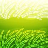 Priorità bassa con le spighette verdi Immagini Stock