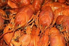 Priorità bassa con molti crawfishes Fotografia Stock