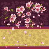 Priorità bassa con sakura - ciliegio giapponese Immagine Stock Libera da Diritti
