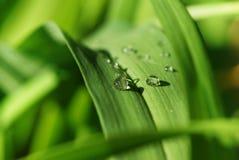 Priorità bassa con un'erba verde Immagine Stock