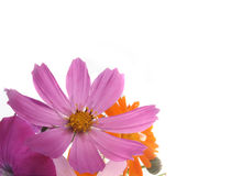 Priorità bassa con un fiore lilla Fotografia Stock