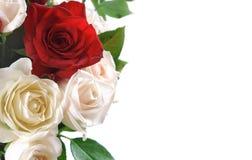 Priorità bassa con una rosa Fotografia Stock