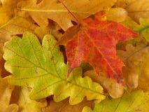 priorità bassa d'autunno Fotografia Stock Libera da Diritti