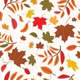 Priorità bassa d'autunno senza giunte Fotografia Stock Libera da Diritti