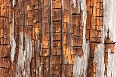 Priorità bassa da un vecchio albero Fotografie Stock Libere da Diritti