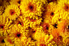 Priorità bassa dai fiori arancioni, crisantemo fotografia stock libera da diritti