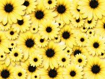 Priorità bassa dai fiori gialli Fotografia Stock