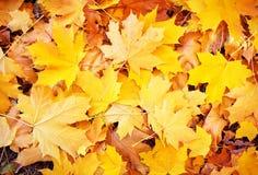 Priorità bassa dai fogli di autunno Fotografia Stock