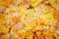 Priorità bassa dai fogli di autunno Fotografia Stock Libera da Diritti