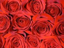 Priorità bassa dalle rose rosse Fotografie Stock Libere da Diritti