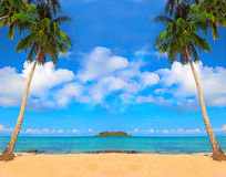 Priorità bassa degli alberi di noce di cocco Immagine Stock